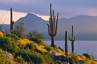 Saguaros and Sierre Ancha<br />