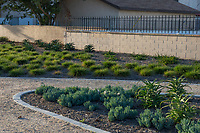 Grasses, aloes, and other succulents planted alongside decomposed granite pathways at State Street park.