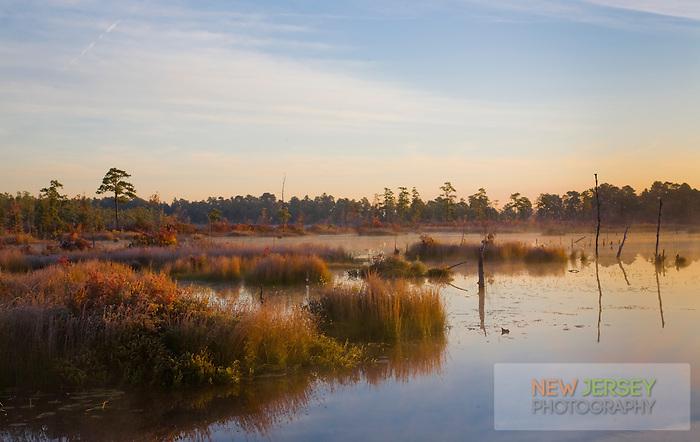 Pinelands pond, Pinebarrens, New Jersey