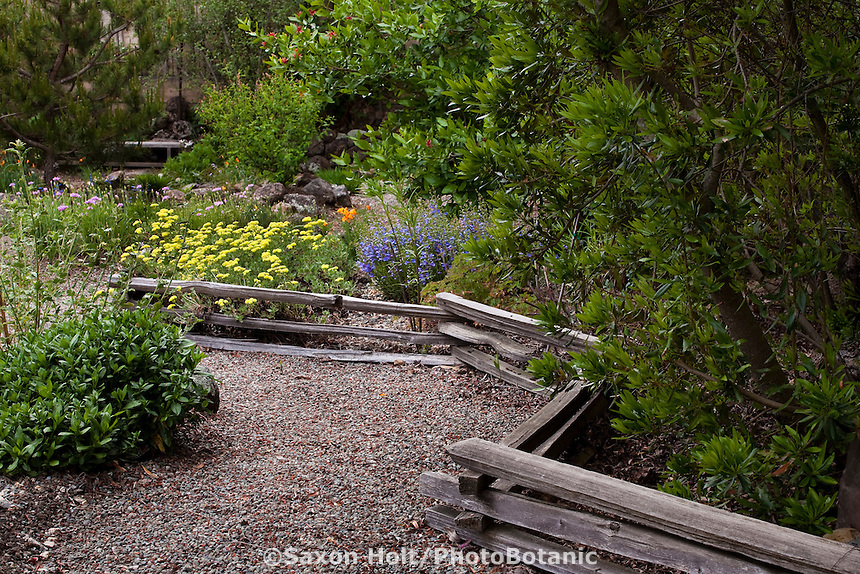 Gravel path walkway edged with low split rail fence winding through Kyte California native plant backyard habitat garden