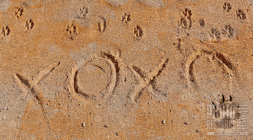 Dog prints along with XOs suggesting the idea of a love letter written by a dog to his owners, I wish you were here.