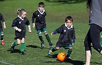 Labradors - Boys Football 290717