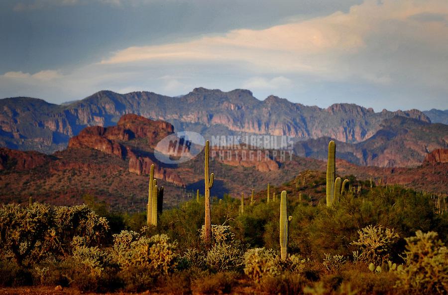 Desert cactus clouds sky Arizona mountain nature saguaro cholla mountains
