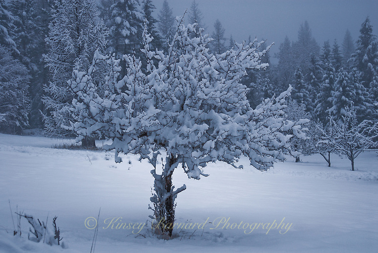 After the storm light reflects on fresh fallen snow to create and moody yet alluring scene of winter.