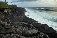 France, île de la Réunion, Saint Philippe, Lieu dit Le Puits Arabe,  côte volcanique //  France, Ile de la Reunion (French overseas department), Saint Philippe, Place called: Le Puits Arabe, volcanic coast