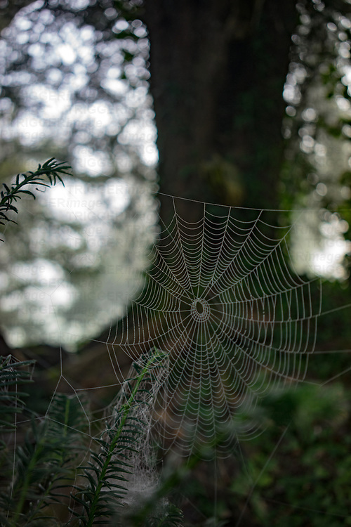 Spider cobweb in woods in England
