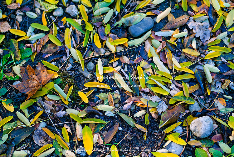 Autumn leaves on the ground with stones.