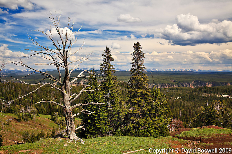 The Grand Canyon of yellowstone is seen in the distance.