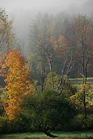 Vermont morning scene.