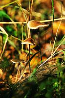 Pilz, Wachstum, Steigerung, Klein, Mittel, Gross,