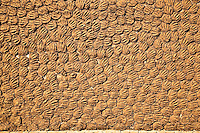 Cow dung drying on a wall to be used as a fuel for cooking. (Photo by Matt Considine - Images of Asia Collection)
