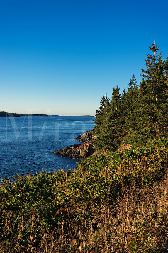 Rugged coastline with trees.