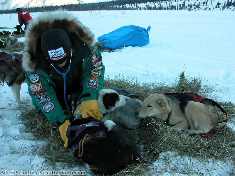 Jon Little.Iditarod veterinarian Jean Dieden checks out dogs resting at Rainy Pass, March 6, 2006