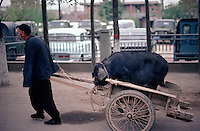 An old man pulls a pig in a handcart through the streets of Huaqing Hot Springs. Whether to or from market or for some other destination, who is to say.