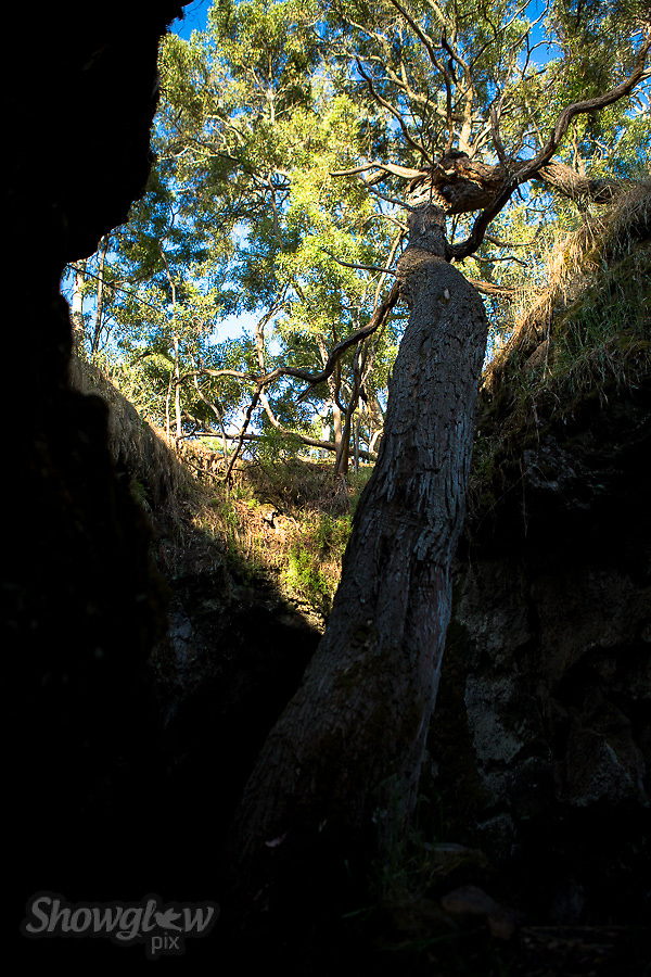 Image Ref: CA474<br />