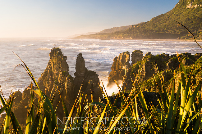 Limestone formations, Pancake Rocks in Punakaiki during sunset, Paparoa National Park, Buller Region, West Coast, New Zealand, NZ