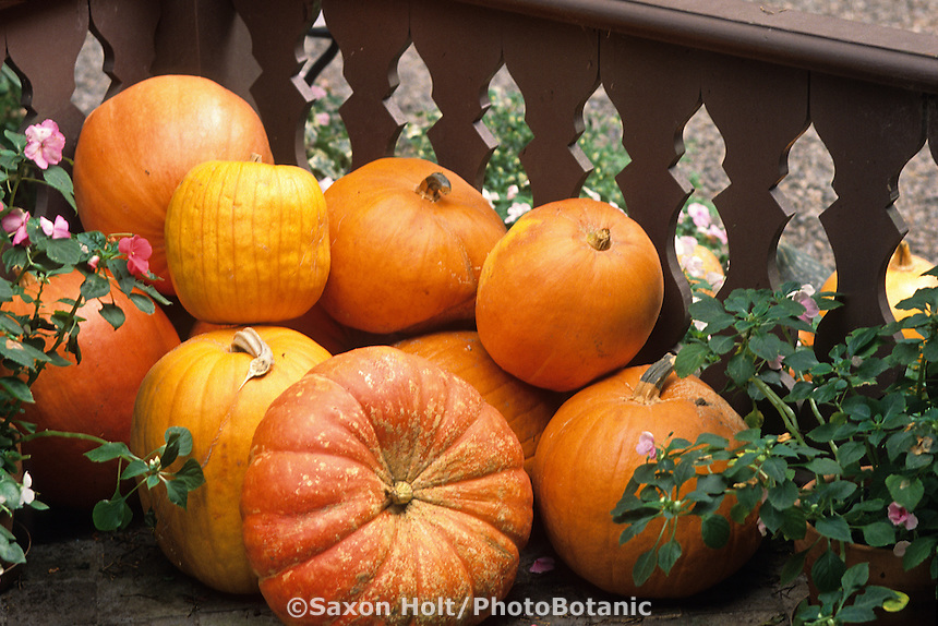 Fall pumpkins on porch-Ironhorse Vineyards