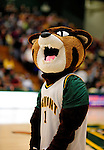 21 January 2010: University of Vermont Catamount mascot Rally Cat prepares to entertain the fans prior to a game against the Stony Brook University Seawolves at Patrick Gymnasium in Burlington, Vermont. The Catamounts fell to the Seawolves 65-60 in the America East matchup. Mandatory Credit: Ed Wolfstein Photo