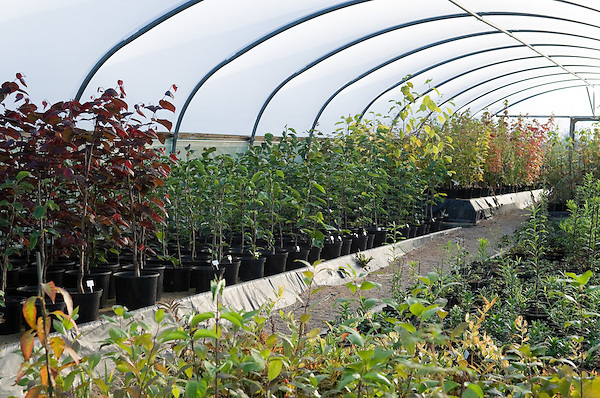 View inside the Polytunnels