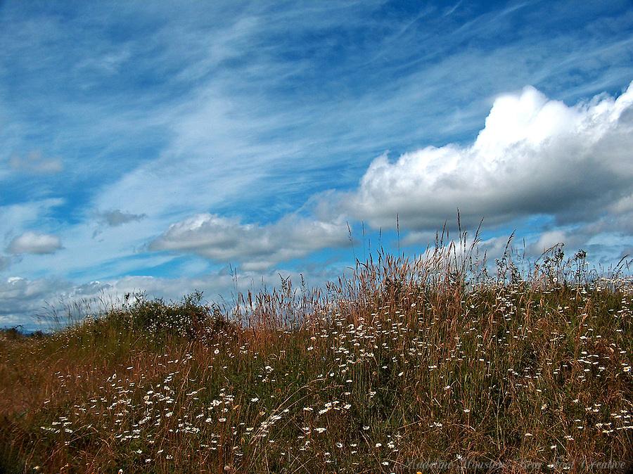 Mima Mounds Natural Area Preserve, Littlerock, Washington, USA