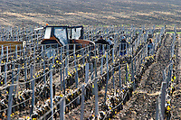 tractor in the vineyard clos des quatre vents margaux medoc bordeaux france