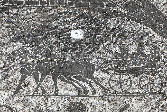 Cisium, a two-wheeled cart for carrying passengers and mules, public urban transportation and interurban service connecting Ostia with Rome along the Via Ostiense, mosaics floor of the frigidarium of the Terme dei Cisiarii (Baths of the Coachmen), late 1st century AD - early 2nd century AD, Ostia Antica, Italy. Picture by Manuel Cohen