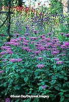 63821-087.02 Pink Bee Balm, Verbena bonariensis, Hollyhocks, Cardinal Climber on trellis  Marion Co.   IL