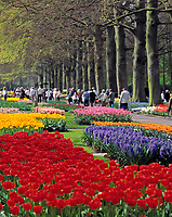 Niederlande, Suedholland, bei Lisse: hollaendische Parkanlage Keukenhof, ein Touristenmagnet zur Zeit der Tulpenbluete | Netherlands, South Holland, near Lisse: Keukenhof also known as the Garden of Europe,  the world's largest flower garden