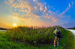 Hiker at tall marsh reeds photographing marshland sunset, Long Island, New York, summer 2011