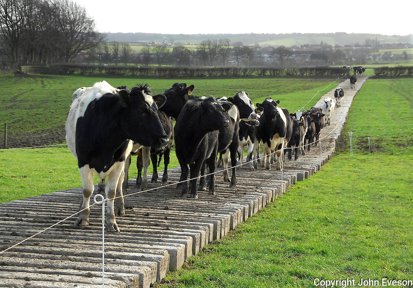 A movable cow track made from 7,000 concrete railway sleepers.