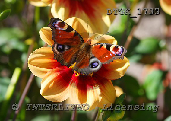 Gisela, FLOWERS, photos, DTGK1733,#f# Blumen, flores, retrato