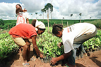 Trabalhadoras rurais cuidam da mudas de pupunheiras em projeto aprovado pela Sudam com suspeita de irregularidades. Altamira, Pará, Brasil.<br />Foto Paulo Santos/Interfoto<br />21/03/2001