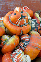 Pile of turban squash at Westham Island Herb Farm, Delta, British Columbia, Canada