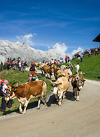 Oesterreich, Salzburger Land, Pinzgau, Dienten am Hochkoenig: Almabtrieb von der Buerglalm | Austria, Salzburger Land, region Pinzgau, Dienten am Hochkoenig: bringing down the cattle from the mountain pastures
