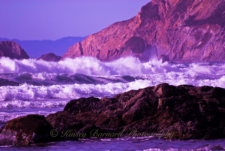 &quot;PT. REYES&quot;<br />