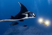 Giant Manta Ray at Socorro Island, Revillagigedos, Mexico