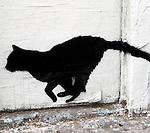 Black-Cat Tuesday
