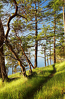 Trail along grassy shoreline, Jones Island Marine State Park, San Juan Islands, Washington State, USA