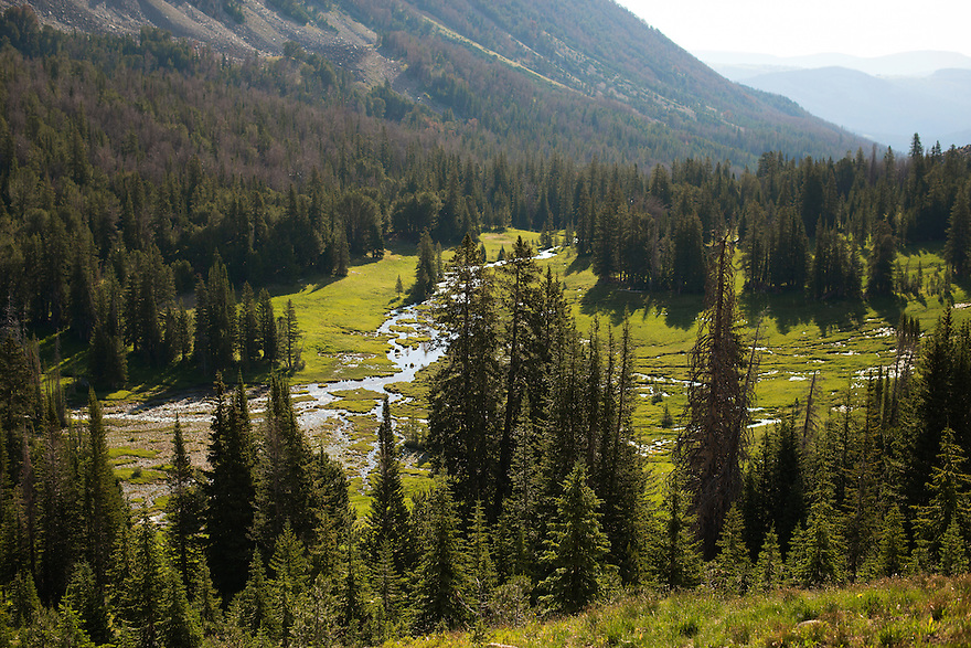 Springs form at the height of a drainage in the Taylor-Hilgard Unit of the Lee Metcalf Wilderness in southwest Montana.