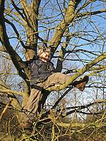 Junge, Kind klettert auf Baum, klettern