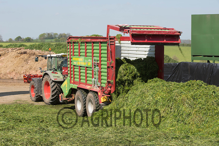 Contractors using Fendt tractors and Strautmann forge wagons collect silage for dairy cows<br /> Picture Tim Scrivener 07850 303986