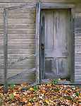 Vilas County, WI<br /> Sagging screen door frame on an old barn with autumn maple leaves