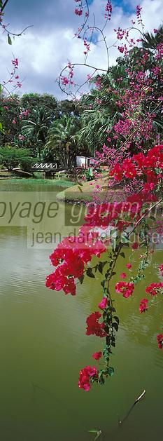 France/DOM/Martinique/Les Trois -lets/Parc des Floralies: Détail bougainvilliées