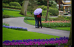 Netherlands, Keukenhof Gardens.  <br /> Match your photographic vision to the day's lighting conditions. These overcast skies let the camera capture detail in every part of this image. On a bright sunny day, this scene would be randomly filled with harsh shadows, that have no detail and little color.
