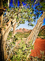 Cathedral Rocks and Juniper - Sedona, Arizona. Red Rock Crossing State Park