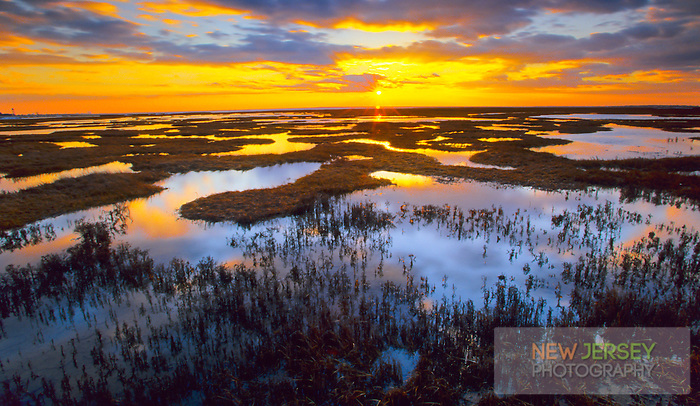 Tidal Salt Marsh, at high tide, Great Bay Wildlife Management Area, New Jersey