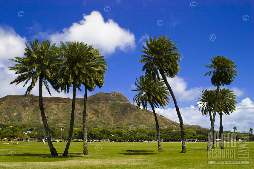 Swaying palm trees in Kapiolani Park frame scenic Diamond Head in the background.