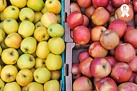 Green and Red Apples on display at store (Licence this image exclusively with Getty: http://www.gettyimages.com/detail/101227253 )