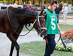 Seanow in the paddock as Opry (no. 8) wins the With Anticipation  Stakes (Grade 3), Aug. 29, 2018 at the Saratoga Race Course, Saratoga Springs, NY.  Ridden by  Javier Castellano, and trained by Todd Pletcher, Opry finished 1 1/2 lengths in front of Somelikeithotbrown (No. 7).  (Bruce Dudek/Eclipse Sportswire)