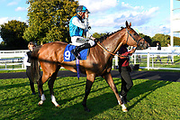 Winner of The Signs In Motion Ltd Handicap Stakes     Silver Swift ridden by Jason Watson and trained by Andrew Balding  is led into the winners enclosure  during Twilight Racing at Salisbury Racecourse on 14th September 2018